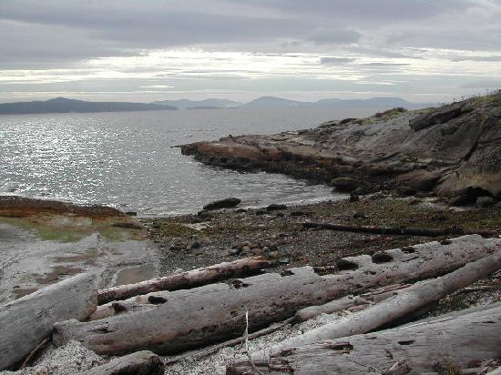 Cedar shoreline
